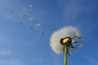 Claves para disminuir la incidencia de las alergias