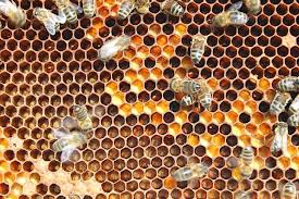 La apiterapia: El poder curativo de las abejas