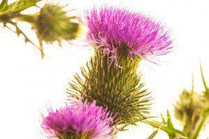 Herbolario especializado en salud natural - Haznos tu consulta